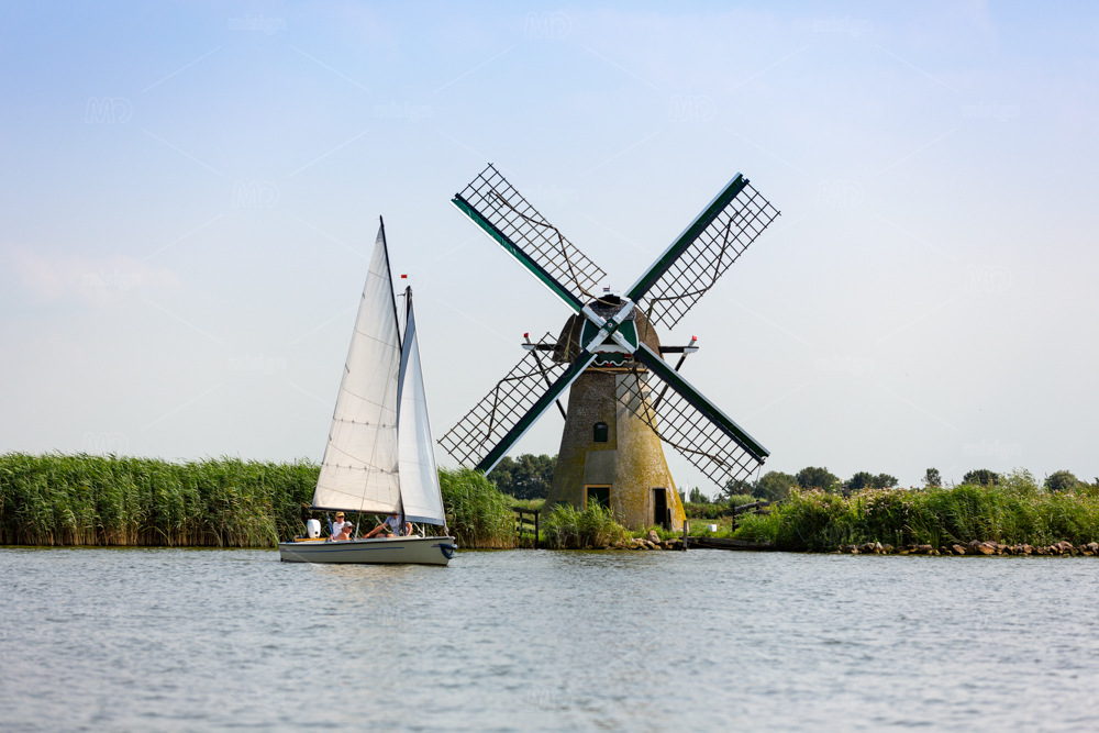 A sailboat with 3 people sailing in front of a windmill on the lake the Kaag in the Netherlands.