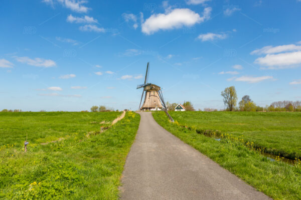 A historic windmill in the green fields and a blue cloudy sky of Nieuwe Wetering in The Netherlands.