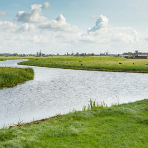 Historic Windmills, farms and cows on the dykes off the Zomersloot in the Dutch village of Oud Ade.
