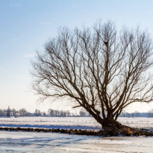 Lonely tree without leaves on the edge of a frozen canal at De Kaag in the Netherlands.