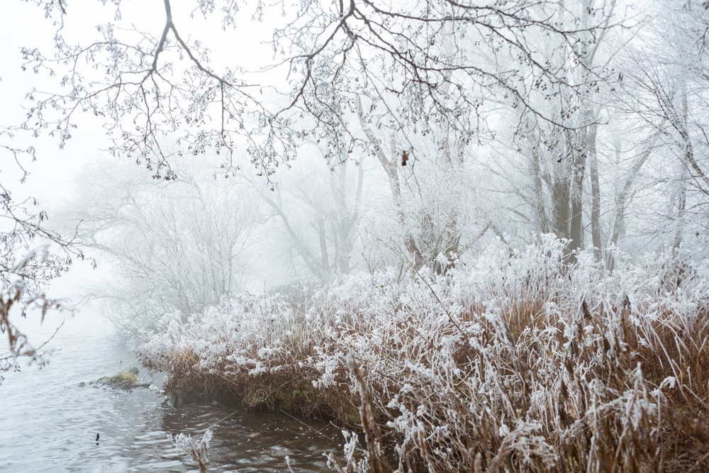 A fairytale world with frozen fog on the trees in Park de Oeverlanden at lake the Nieuwe Meer in the city of Amsterdam the Netherlands.