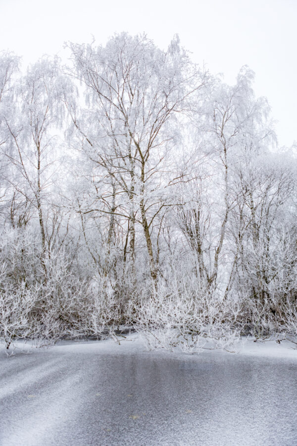 White frozen trees on the edge of a frozen ditch in the Amsterdamse Bos in the Netherlands.